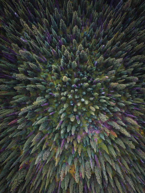 Big White Forest Fine Art Photo Print
