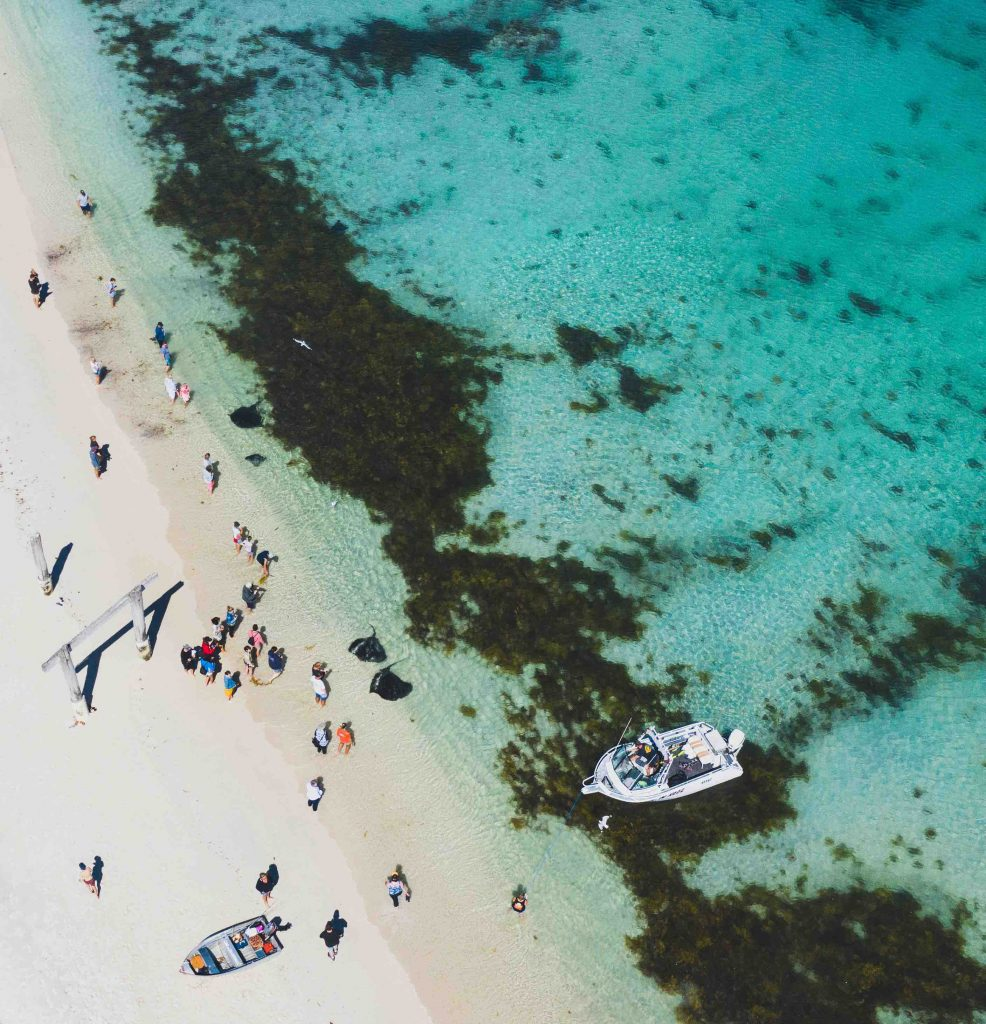 Stingrays seen from the air at Hamelin Bay, Western Australia