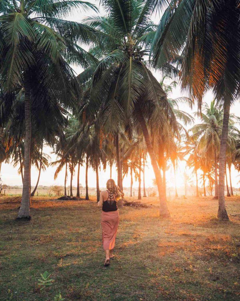 Palm Tree Sunset in Sri Lanka
