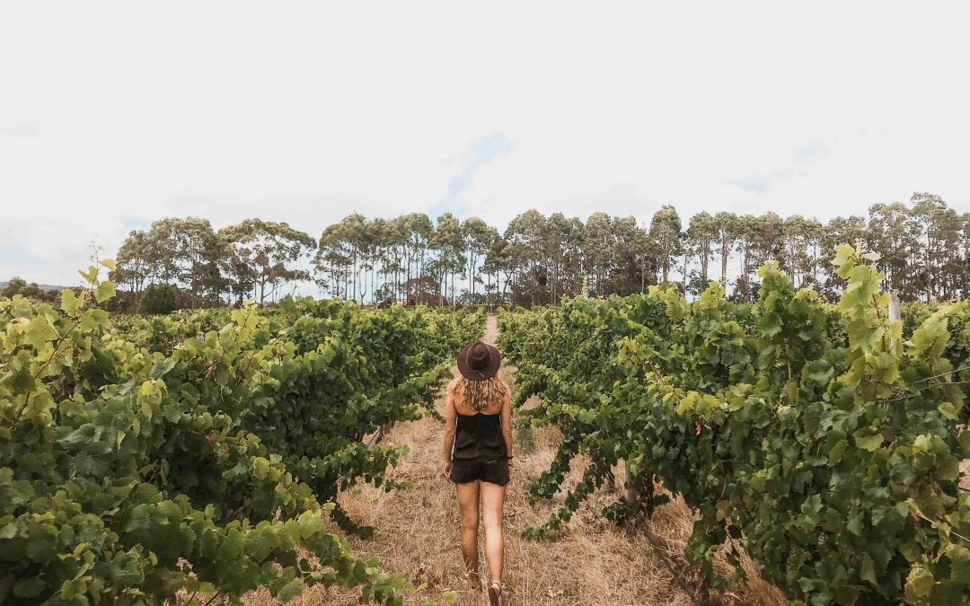 The Margaret River Region | 10 Reasons You Should Visit