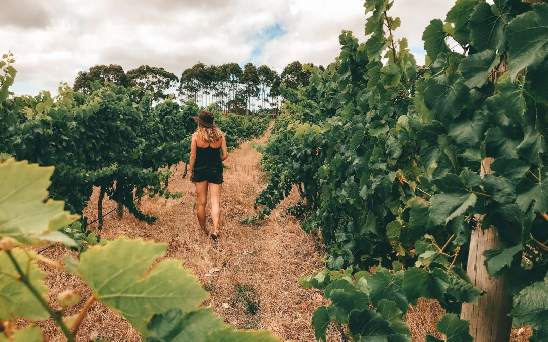 The Perfect Wine Tour Itinerary | Margaret River