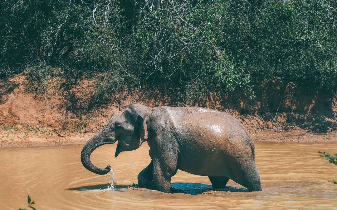 Yala National Park | Everything You Need to Know