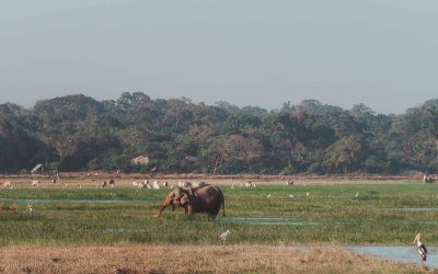 Kumana National Park Safari | DIY