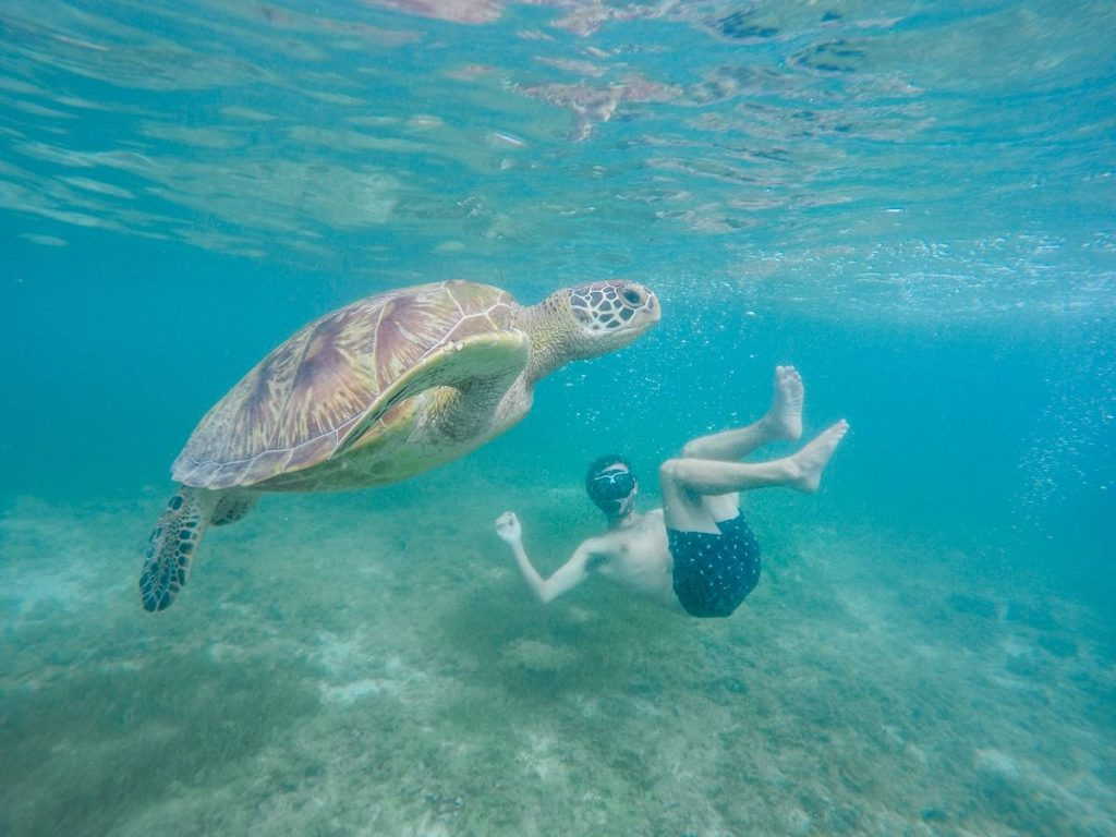 Swimming with turtles at Panagsama beach in Moalboal