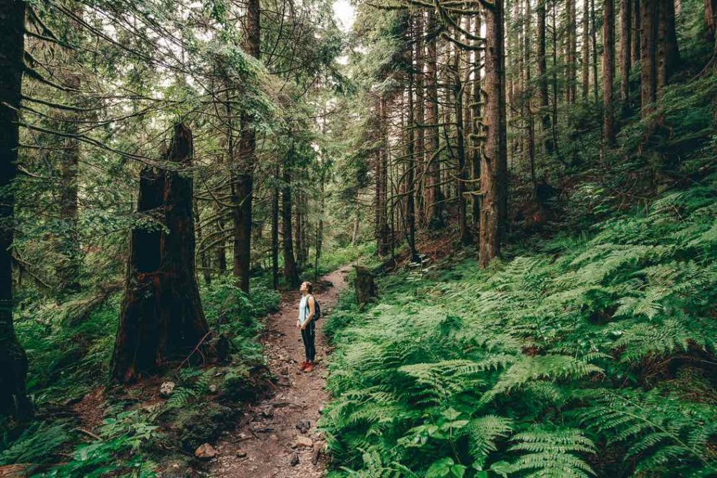 Trail to Norvan Falls